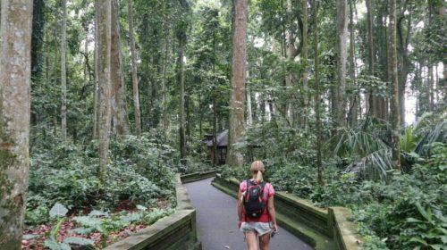 femme qui marche dans une forêt